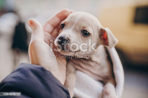 Cute little staff terrier puppy in cozy warm blanket in autumn park. Hand hugging scared homeless beige puppy in city street. Adoption concept. Dog shelter.