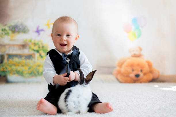 Cute little toddler boy, dressed smart casual, playing with little black and white rabbit stock photo