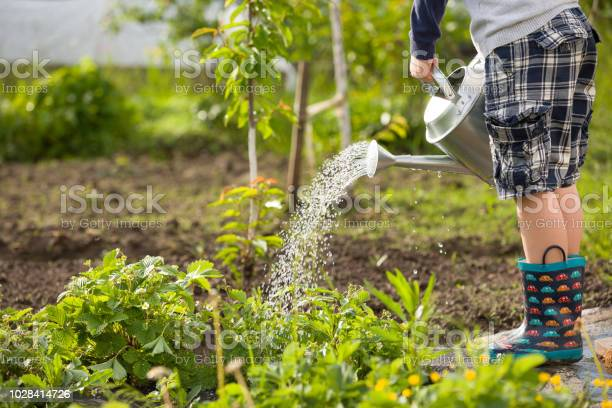Cute little toddler boy watering plants with watering can in the picture id1028414726?b=1&k=6&m=1028414726&s=612x612&h=c25ln2 geny p6fl lxx0oeukkzgf293jpcoyrobff8=