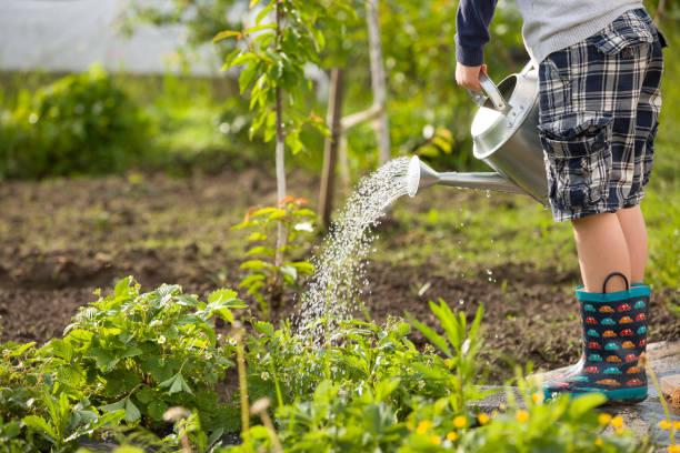 niedliche kleine kleinkind junge pflanzen mit gießkanne im garten gießen. entzückenden kleinen kind hilft eltern, gemüse anzubauen und spaß. aktivitäten mit kindern im freien. - gartenarbeit stock-fotos und bilder