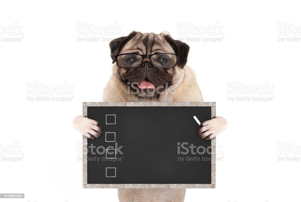schattig mannelijke pug hond pup bedrijf leeg controlelijst op blackboard met selectievakjes getekend met krijt foto