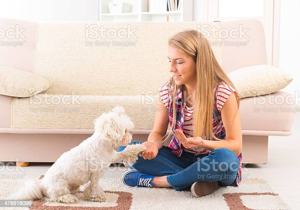 Cute maltese dog giving a paw picture id476918099?b=1&k=6&m=476918099&s=612x612&h=8cuttwp f rxv7tm uzjgocb3 w19eeawfswvl8sh6s=