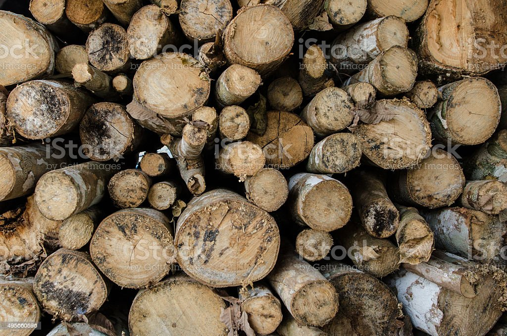 Cute Mangrove tree at charcoal factory stock photo