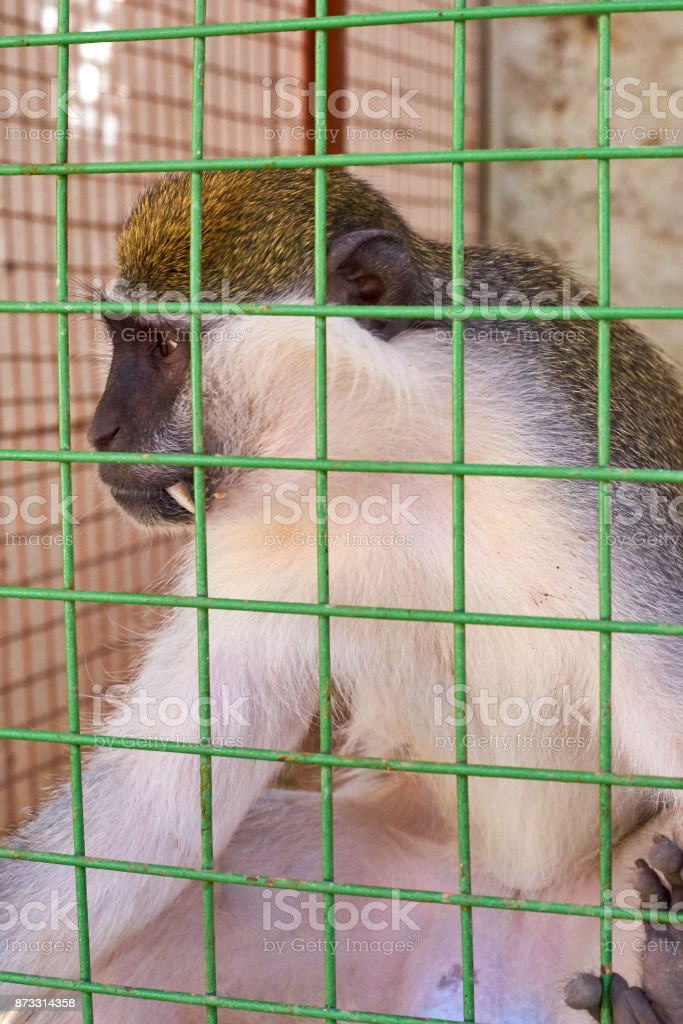 Cute monkey sitting in cage on farm stock photo