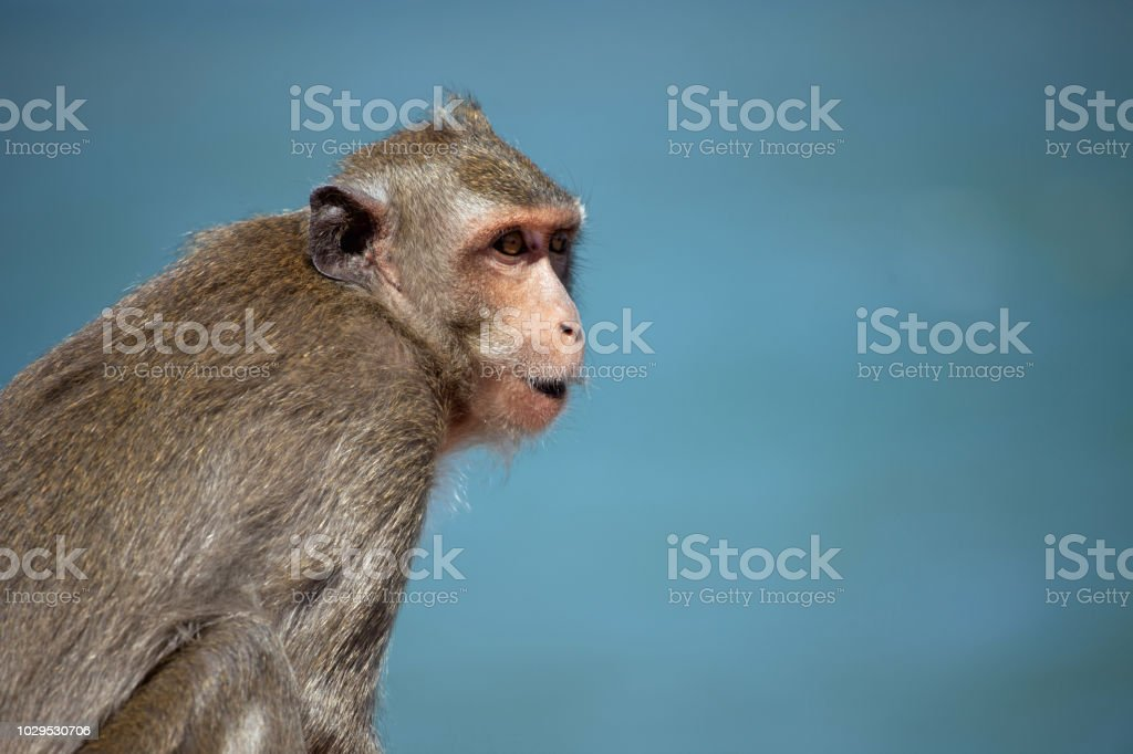 Cute monkeys stock photo