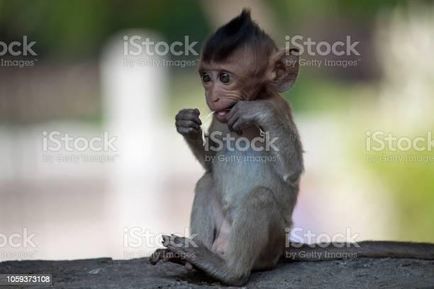 Cute monkeys picture id1059373108?b=1&k=6&m=1059373108&s=612x612&h=nf8xbfkrafxpqmgy40olp9nmipsxyjkxshnv6i4hehy=