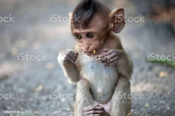 Cute monkeys picture id1059373150?b=1&k=6&m=1059373150&s=612x612&h=xrwbeoisdfrhngbkowr2nsl hokbppehpwqcsr1znfk=