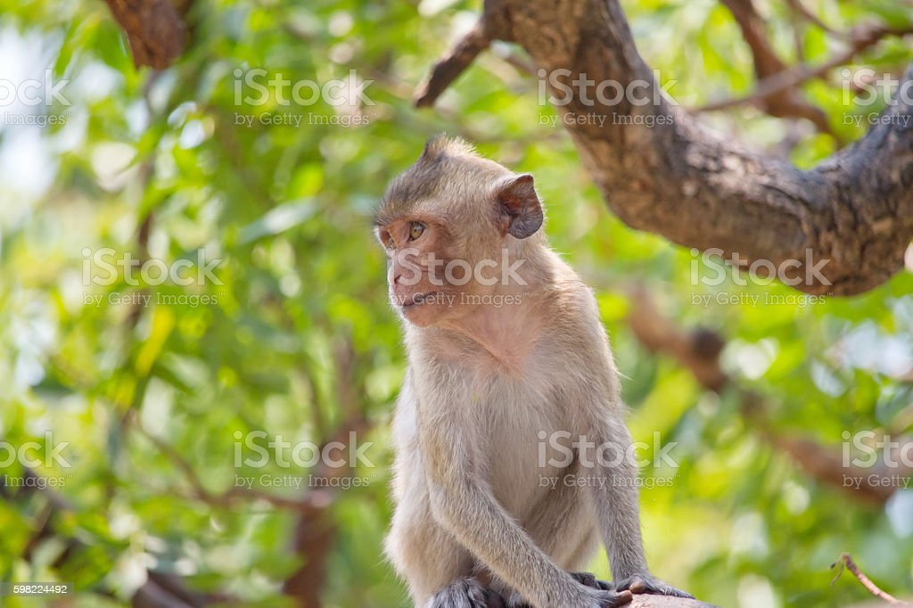 Linda macacos foto royalty-free