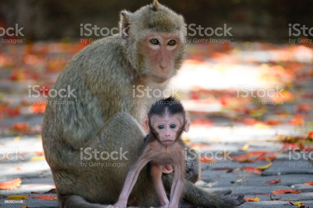 Cute monkeys - Royalty-free Animal Stock Photo