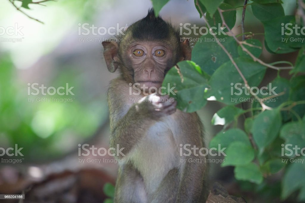 Cute monkeys royalty-free stock photo