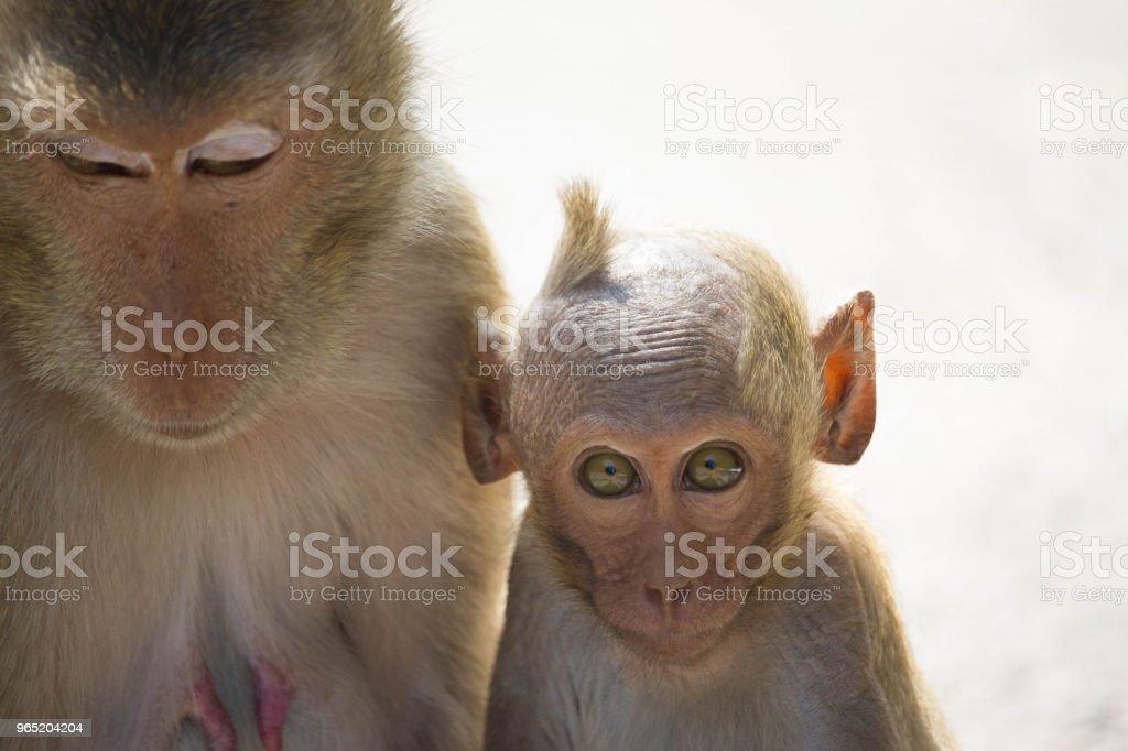 Cute monkeys zbiór zdjęć royalty-free