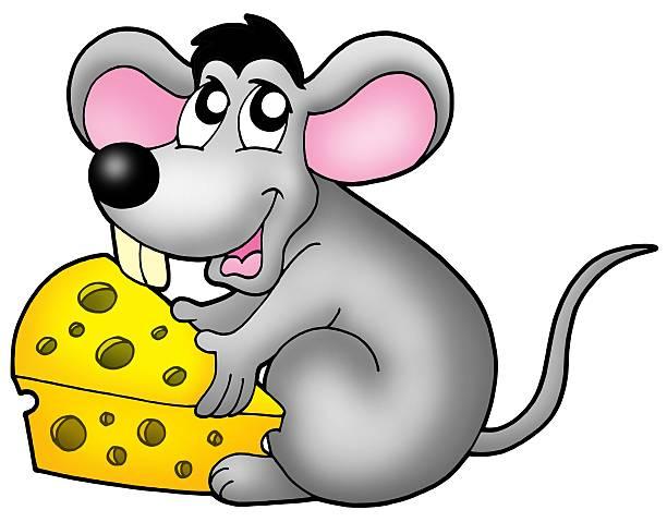 süße maus holding käse - maus comic stock-fotos und bilder