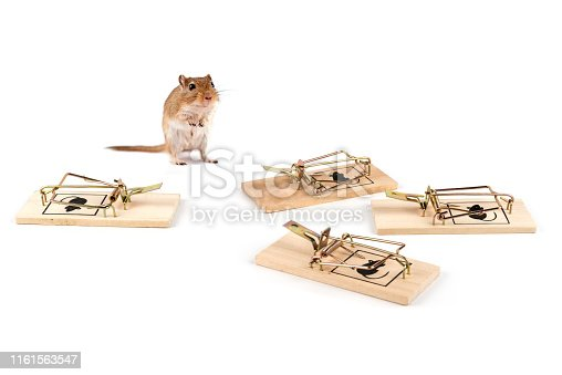 cute hamster confused about the whole mousetrap