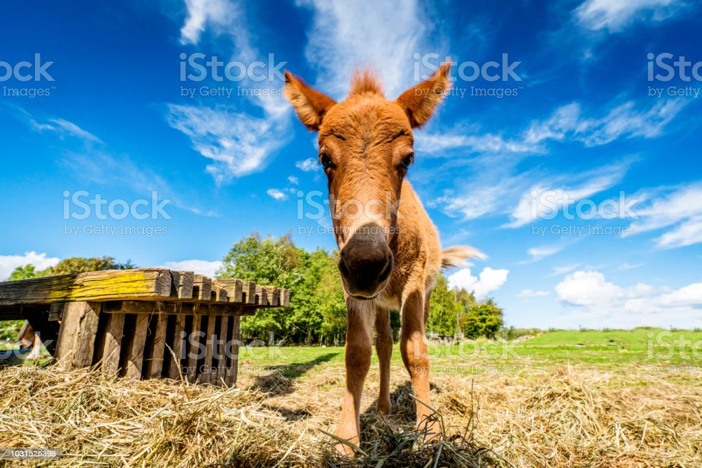 Cute mule standing in a farm yard stock photo