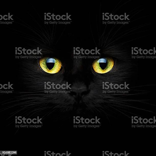 Cute muzzle of a black cat picture id504982096?b=1&k=6&m=504982096&s=612x612&h=qpzbv7q7jew72lkvixvwhaepjozt1uni0avnleg1ccm=