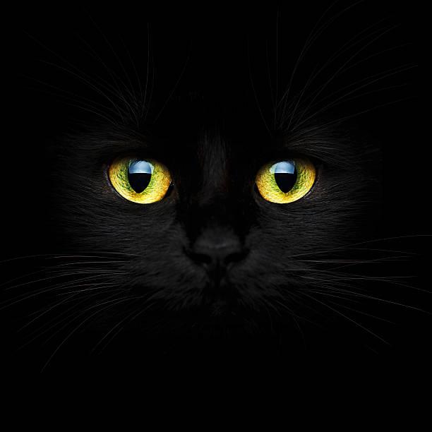 Cute muzzle of a black cat picture id504982096?b=1&k=6&m=504982096&s=612x612&w=0&h=wqwm1l8fcr wig ihuekeoy6 sf36zghkizqcm cyoy=