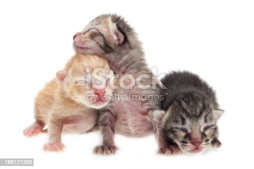 Cute new born kittens on white background