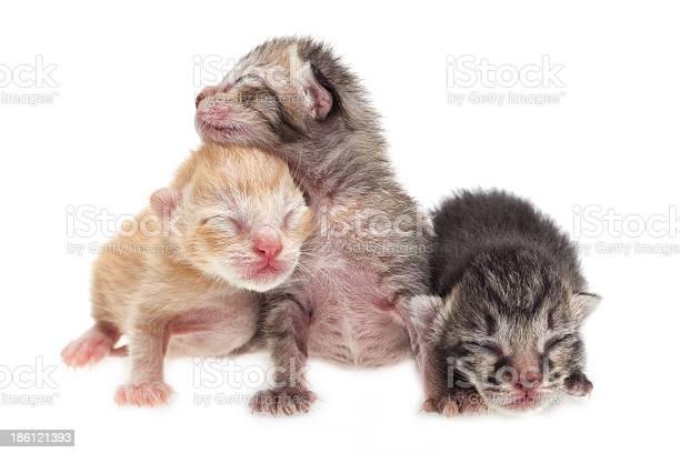 Cute new born kittens picture id186121393?b=1&k=6&m=186121393&s=612x612&h=oqa zntt r77jxteagjmvn9gtgp0id2setjrem7wez8=
