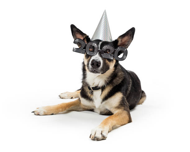 Cute New Year 2020 Party Dog stock photo