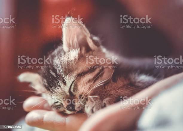 Cute newborn orphaned kitten sleeping in womans hand picture id1028639650?b=1&k=6&m=1028639650&s=612x612&h= nhrtndp7sjcn4y32hd2fqn07ebbd aww6mmwcco94y=