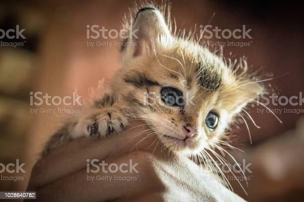 Cute newborn orphaned kitten sleeping in womans hand picture id1028640782?b=1&k=6&m=1028640782&s=612x612&h=fquduz235lnikjnkrdaj tzm3hb6srn3ajhxb3zmsfg=