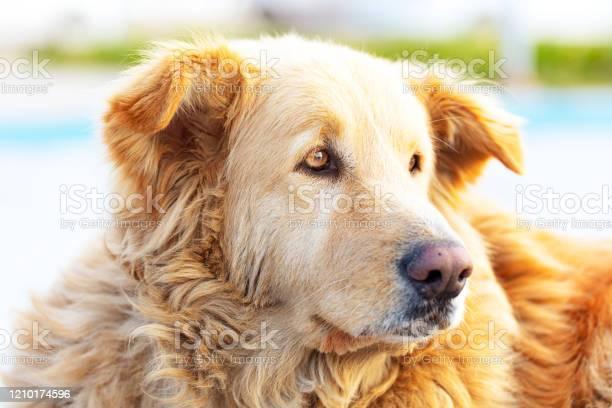 Cute old and sad brown stray dog picture id1210174596?b=1&k=6&m=1210174596&s=612x612&h=4jik6vvriauc190 f tijbww54wjgex m7dffllrwh8=