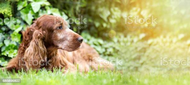 Cute old dog banner picture id685896802?b=1&k=6&m=685896802&s=612x612&h=ldwbh65gehg65vlhcixx2ip5atg1sxx4gzqr3ffjxo0=