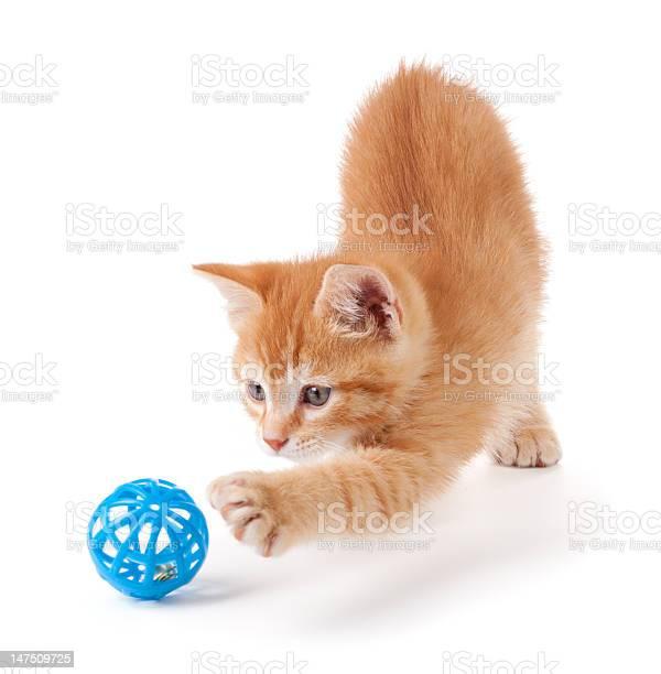 Cute orange kitten playing on a white background picture id147509725?b=1&k=6&m=147509725&s=612x612&h=yx4r4cykyupsx 8kkykm3dia mlkfr1uw7ogscscpeq=