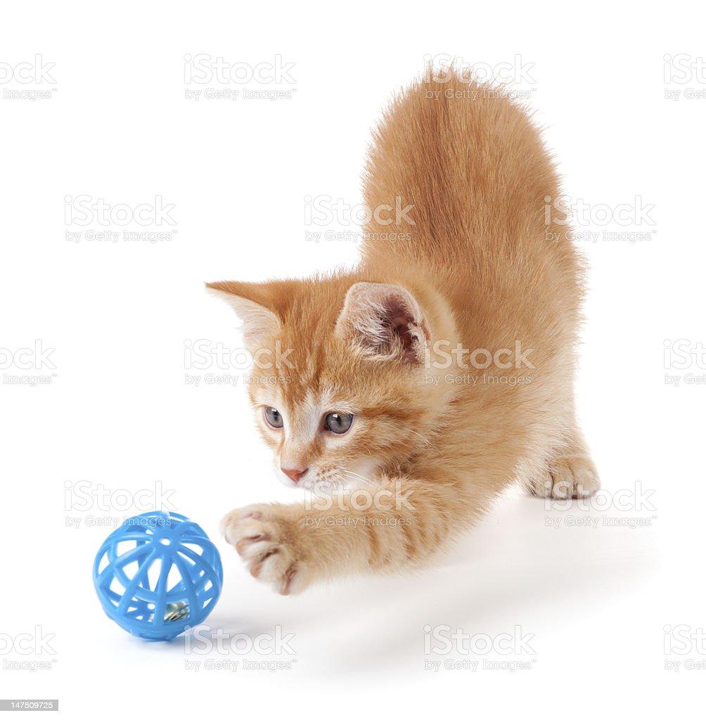 Cute orange kitten playing on a white background. stock photo