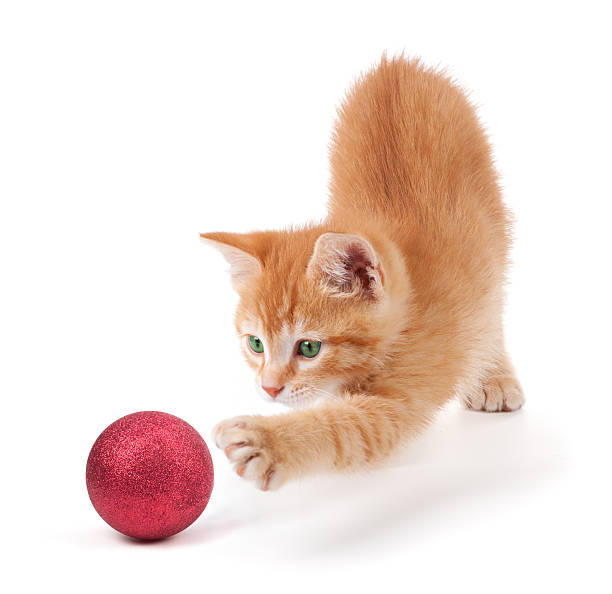 Cute orange kitten playing with a christmas ornament on white picture id158029860?b=1&k=6&m=158029860&s=612x612&w=0&h=6c6zibwiv2i irnz lgz  utspqqrbn0rytchm dh04=