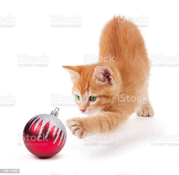 Cute orange kitten playing with a christmas ornament on white picture id158173587?b=1&k=6&m=158173587&s=612x612&h=8hdvtc4fq3qaulhx40fzj7dpf38lf4e37 hdkaenici=