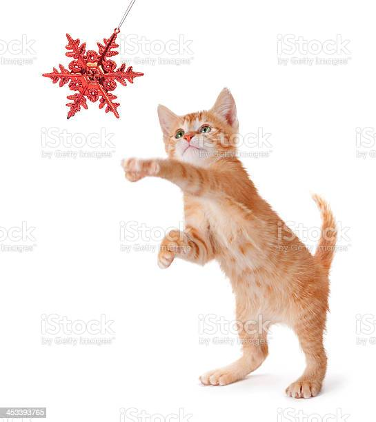 Cute orange kitten playing with a christmas ornament on white picture id453393765?b=1&k=6&m=453393765&s=612x612&h=jykvjz5wiqrfr7b 5 tstj1fsqcipjde8z ugis0vma=