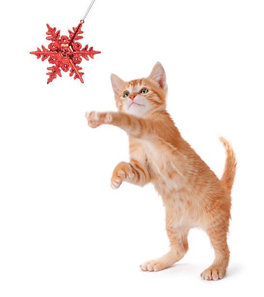 Cute orange kitten playing with a christmas ornament on white picture id453393765?b=1&k=6&m=453393765&s=612x612&w=0&h=h jskzdodx5e lvsnlxu3pwdhk aazc2fbzibh6crpk=