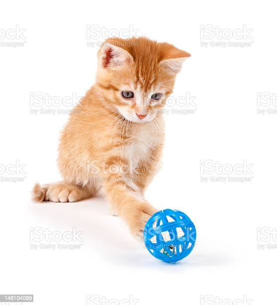 Cute orange kitten playing with a toy on white picture id148104099?b=1&k=6&m=148104099&s=612x612&h=f3domd5zmdhm1fenlq0ce wo7up7y2lwzpipms3s3mq=