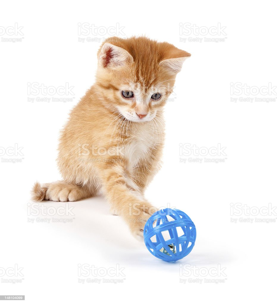 Cute orange kitten playing with a toy on white. stock photo