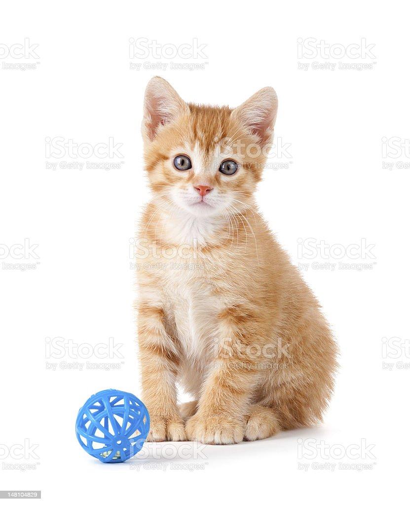 Cute Orange Kitten Sitting Next To A Toy White stock photo