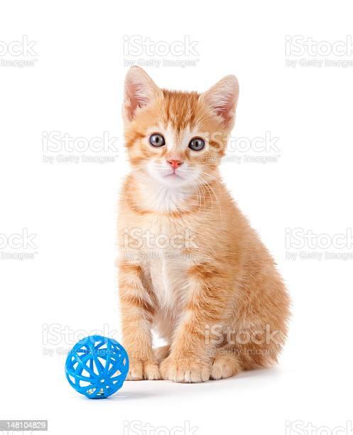 Cute orange kitten sitting next to a toy on white picture id148104829?b=1&k=6&m=148104829&s=612x612&h=8qy dzmd xo7wyu6kzyaeba8xxh9mfe6ppgefil hbm=
