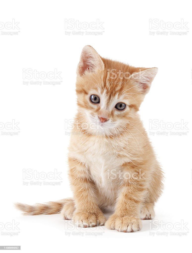Cute orange kitten with large paws. stock photo