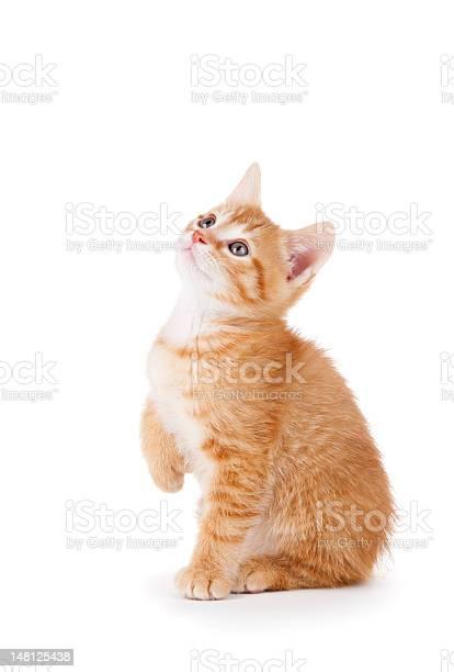 Cute orange striped tomcat kitten looking up with cute eyes picture id148125438?b=1&k=6&m=148125438&s=612x612&h=rwey4m 8ojcqca8emlossqcvjjomwfhguhcaqrjpydc=