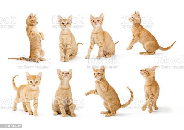 Cute orange tabby kitten in different positions picture id1023738912?b=1&k=6&m=1023738912&s=612x612&h=rnxup9njy0r1rhlkixqbmqhns7qojftu8mixishzxiw=