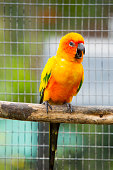 Cute parrot in the cage