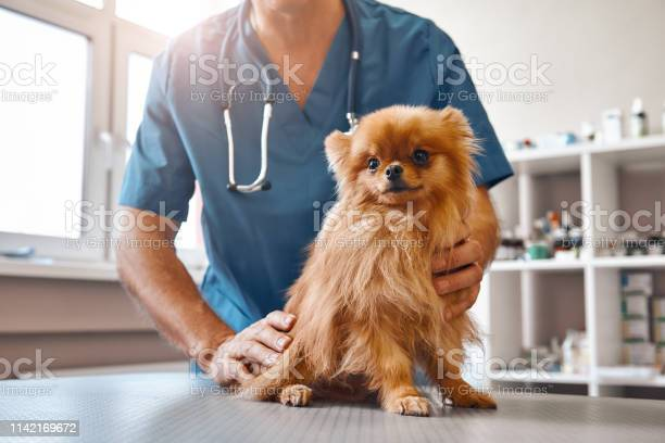 Cute patient male vet in work uniform holding little beautiful dog picture id1142169672?b=1&k=6&m=1142169672&s=612x612&h=eim4dibk91jnxsh6jtnf15gjsa 45uev1kj4 spkexi=