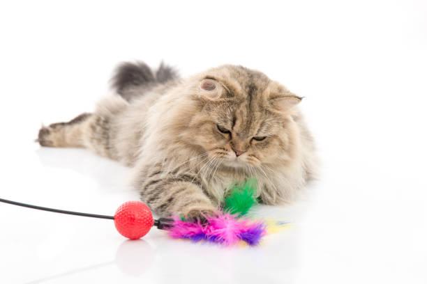 Cute persian cat playing toy picture id656948112?b=1&k=6&m=656948112&s=612x612&w=0&h= 7dcpa3sfp0lgadjkvkha gzpmvtk0kgtqzq1ws3viy=
