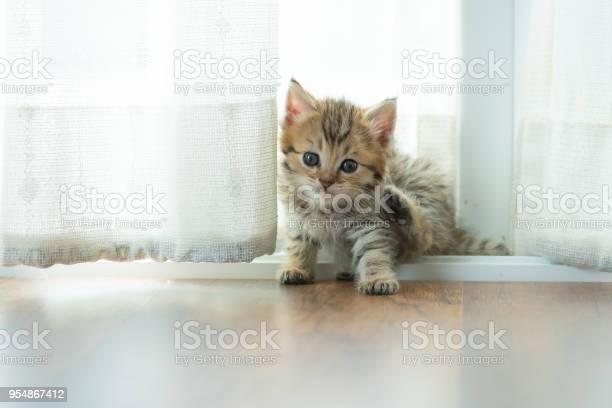 Cute persian kitten picture id954867412?b=1&k=6&m=954867412&s=612x612&h=2bna1kwscknyktaf0ytreauy xzxn3jste6wsjg phi=