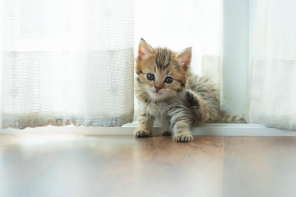 Cute persian kitten picture id954867412?b=1&k=6&m=954867412&s=612x612&w=0&h= emkwzyvpsld2j gm12tmjdqwkfm6k1hvofgtqmpa u=