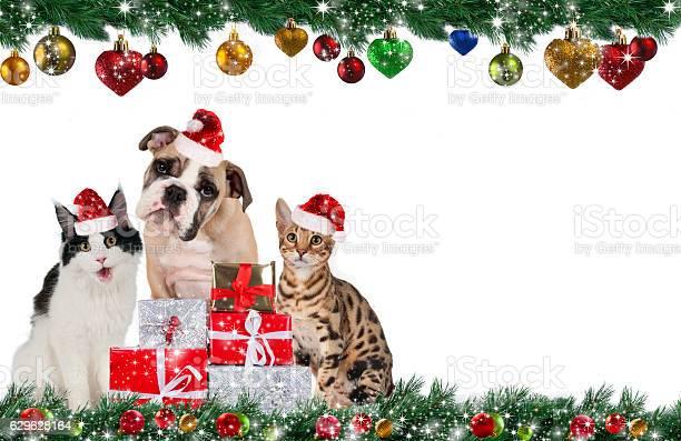 Cute pet group on christmas picture id629628164?b=1&k=6&m=629628164&s=612x612&h=tkkdw1ekwj 72icpc5b nnjip3ciynmj7wvvpgnd9nu=