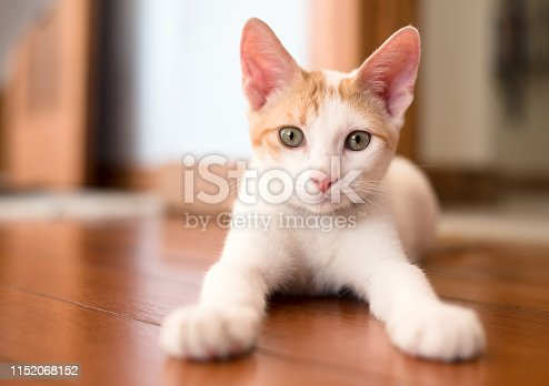 Shot of a kitten sitting on floor at home and looking at camera