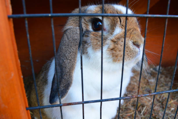 Cute Pet Rabbit in Cage stock photo
