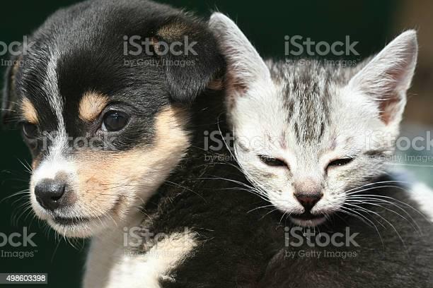 Cute pets picture id498603398?b=1&k=6&m=498603398&s=612x612&h=temfdimnxyhwo1aghwoane5emx9om2mrfhi8y8 qfs4=