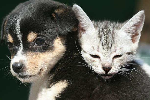 Cute pets picture id498603398?b=1&k=6&m=498603398&s=612x612&w=0&h=q2nchiy tj74ybl5kj6apktiixgpxdeadbmx17bwcn8=